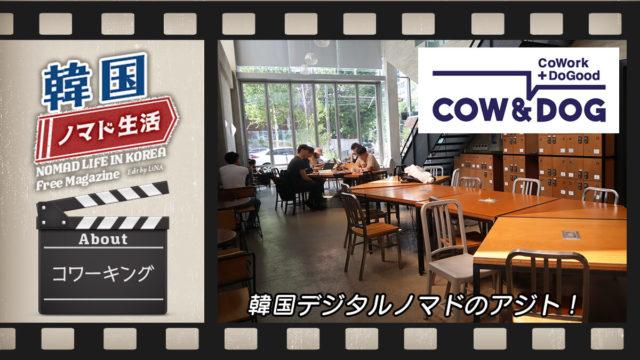 韓国コワーキング_CowNDog